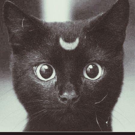 Stay wild moon child Notminebutistillloveit Meow