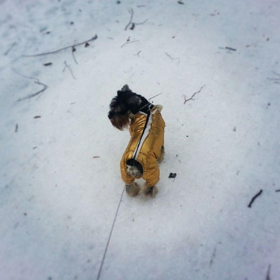 Swagdog Swag Dog Russia winter зима зима2013