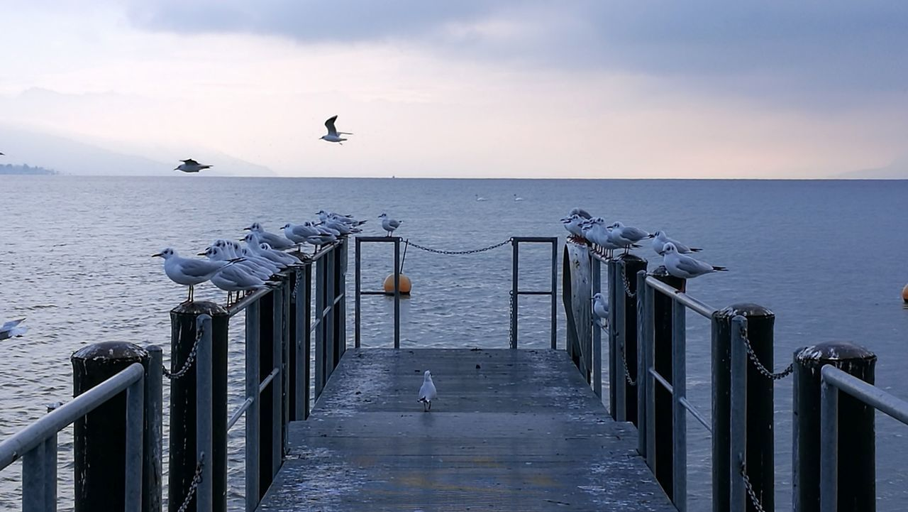 sea, water, horizon over water, railing, nature, scenics, sky, outdoors, tranquil scene, tranquility, beauty in nature, animal themes, animals in the wild, day, no people, bird, sunset, animal wildlife