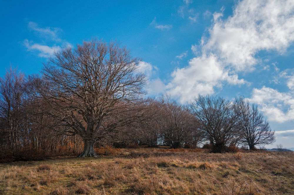 Tree Sky Growth Nature No People Outdoors Day Cloud - Sky Tranquility Beauty In Nature Landscape Panoramic Nature NikonD3300📷 Treescape Rural Scene Mountain Range Tree Forest Autumn Light Autumn Mood Clear Sky Winters Day Mountain Tree And Nature Tree Silhouette