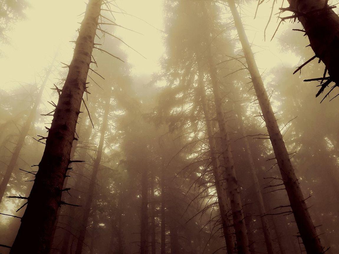 In The Forest Foggy Day Foresta Foggyforest Sestola2k15