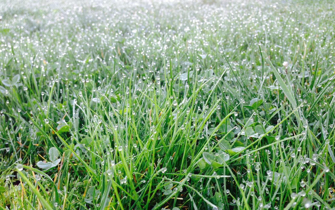Grass Green Color Nature No People Wet Morning Spring Early Morning Growth Lawn Green