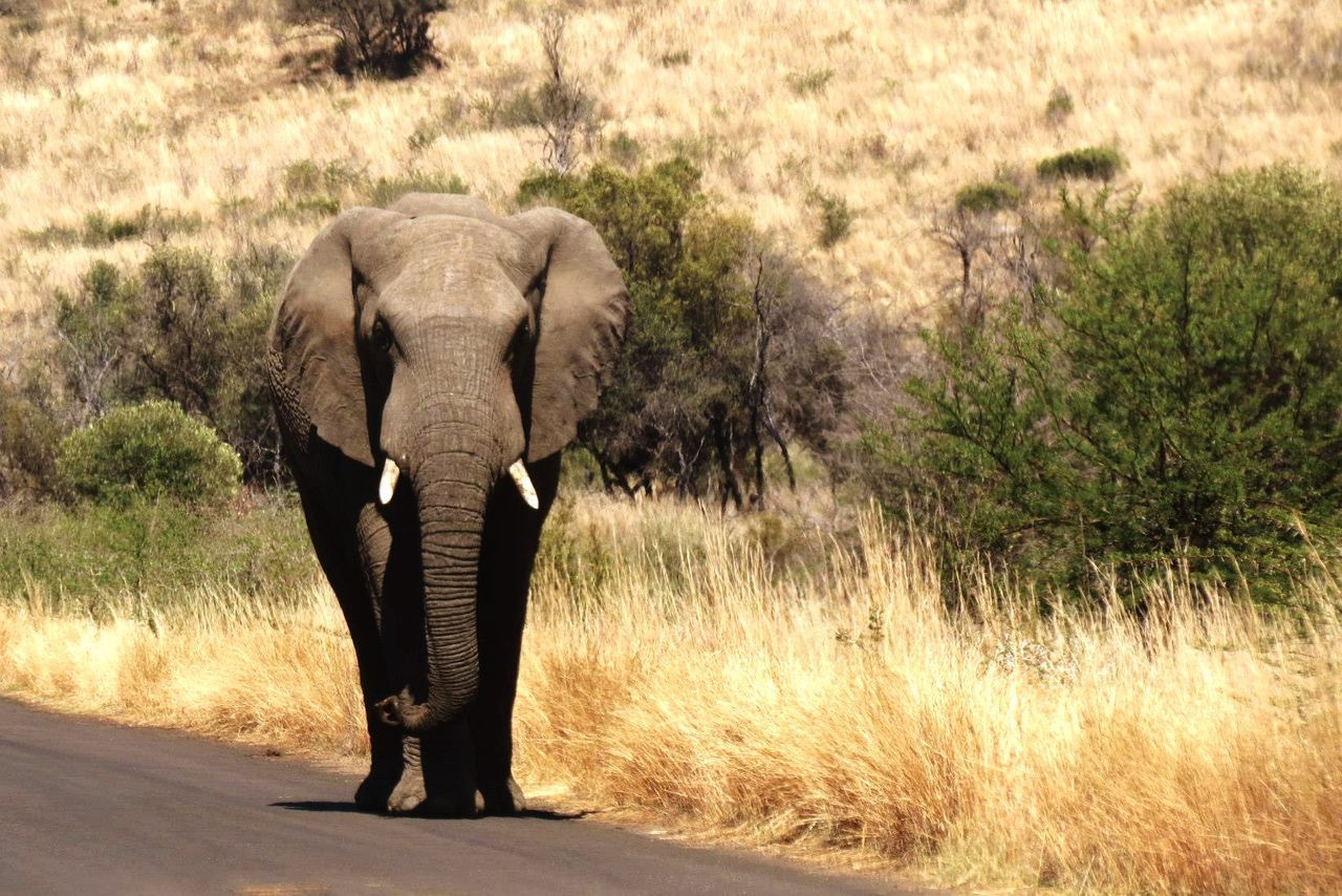 Elephant Majestic Animal_collection Wildlife Beautiful Photography Animals South Africa