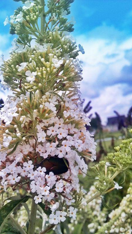 last year's beetles Nature Flower Bug Beetle