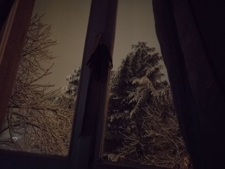 Tree No People Outdoors Nature Day Sky Close-up Night Snow ❄ Snow Snow❄⛄ Snowing No Filters Or Effects Winter Trees Winter Sky Windows_aroundtheworld Trees Nigth 🌜⭐️ Looking Looking Through Window