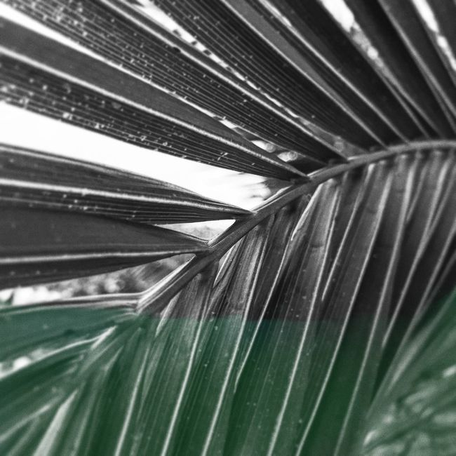 Sochi Leafes Green Nature Blackandwhite Palm Russia