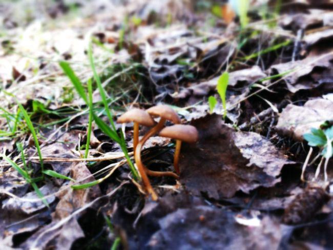 Mushrooms Moixardons