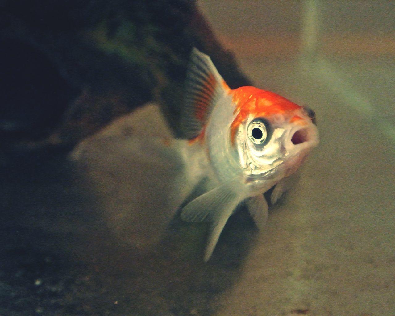 Beautiful stock photos of fish, Animal Themes, Animals In The Wild, Aquatic, Close-up