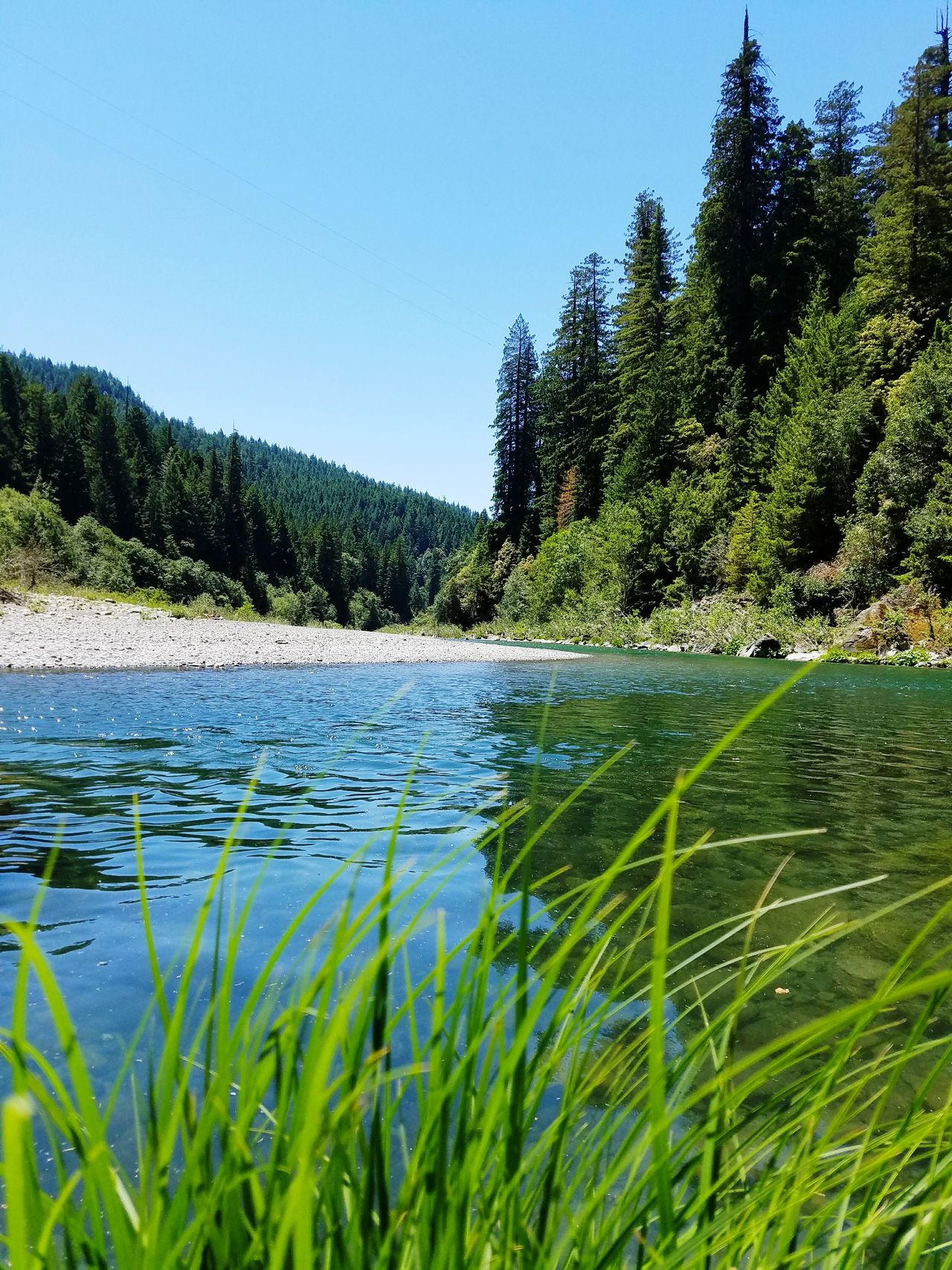 Redwood River Park Redwoods And River Outdoors Nature Summer Tranquility Forest Grass Swimming Swimming Time Summer Time  Beautiful Day Beautiful Riverview