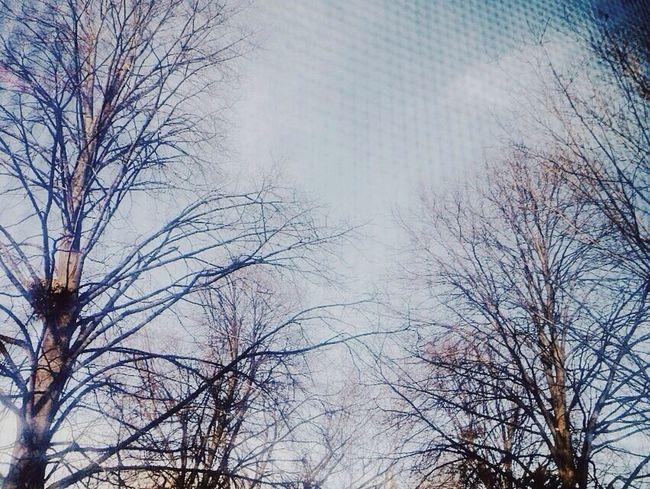 Minnesota Minneapolis Window Screen Fall Winter Minnesnowta Leaves Trees Nature