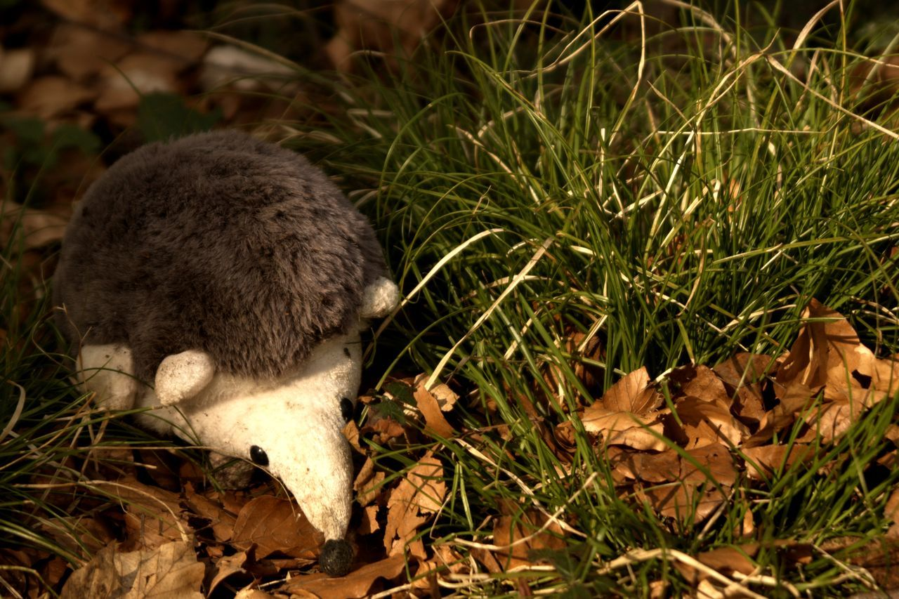 The little hedgehog / Strange animals live in German forests. This is not a posed photo. This cute little hedgehog I really found at a forest walk so. Animal Themes Animal Wildlife Animals In The Wild Civilization Meets Nature Close-up Cute Day EyeEm Nature Lover Forest Grass Grass Hedgehog Hello World Leaf Leafes Light And Shadow Nature Nature Nature_collection No People One Animal Outdoors Plushy Taking Photos Walking Around
