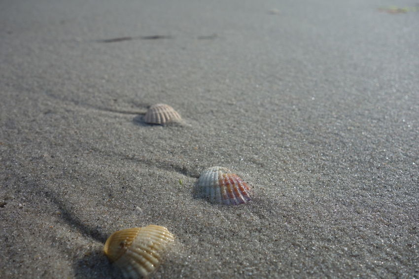 Sand & Sea Sand Seashells Wet Sand