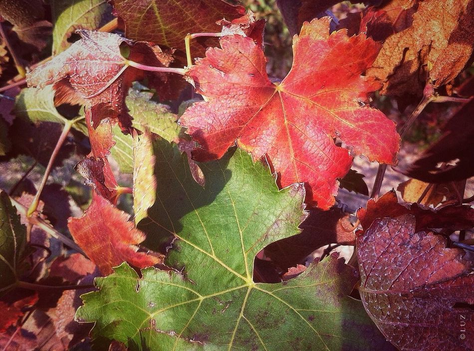 Natural Nature_collection IPhoneography Autumn