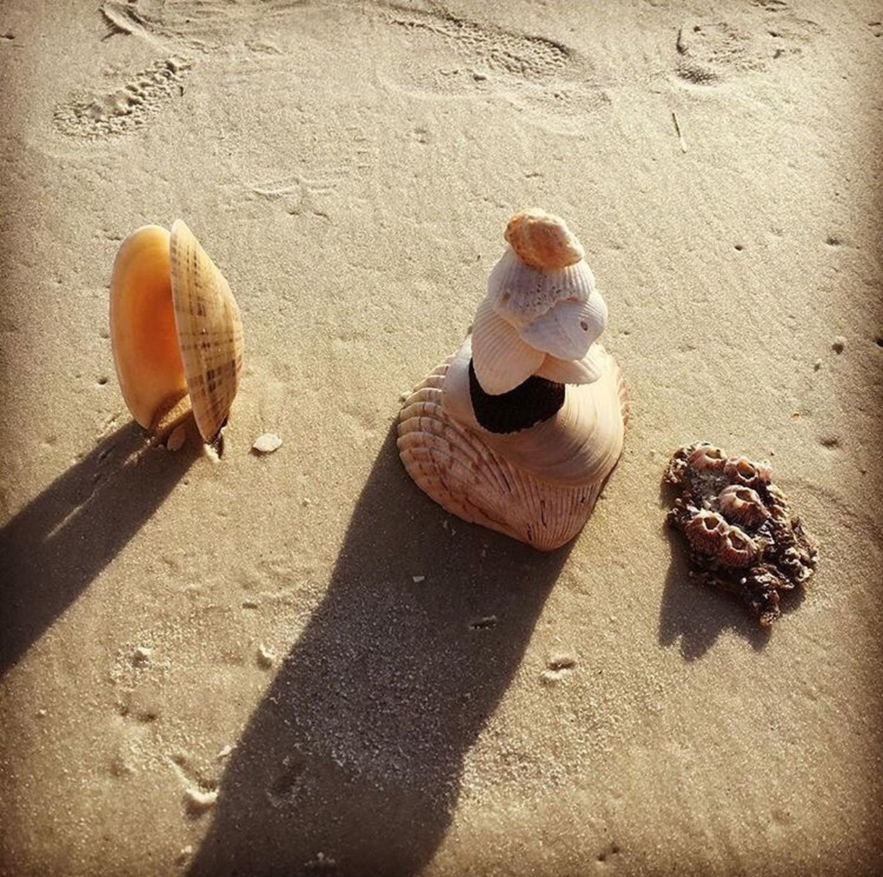 🐚Shell Stacking🐚 Shadow Sunlight Sitting Sand Sunny Summer Day Outdoors Vacations EyeEmBestPics Check This Out EyeEm Gallery EyeEm Best Shots - Nature Fresh On Eyeem  Fortmyersbeach Floridabornandraised Beachbum Shelling Shells This Week On Eyeem EyeEm Nature Lover EyeEm EyeEm Team