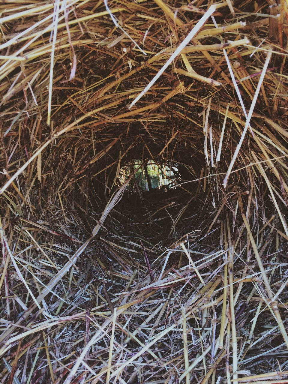hay, animal themes, no people, bird nest, outdoors, one animal, high angle view, animals in the wild, day, straw, close-up, grass, full frame, nature