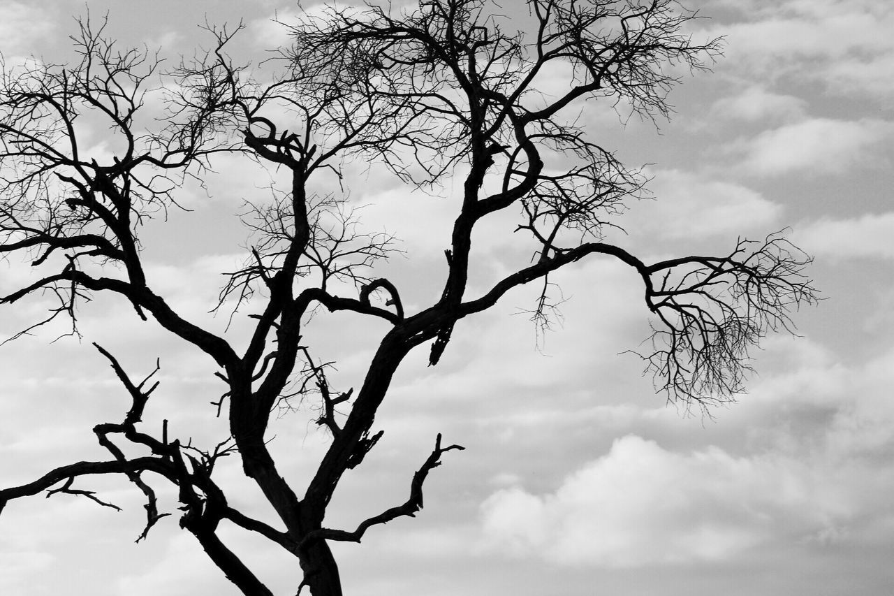 Tree Sky Low Angle View Nature Branch Bare Tree Tranquility No People Beauty In Nature Outdoors Cloud - Sky Silhouette Scenics Day Close-up Silhouettes Black And White Monochrome Beauty In Nature Lines And Shapes EyeEm Best Shots Check This Out in Kruger Park , South Africa