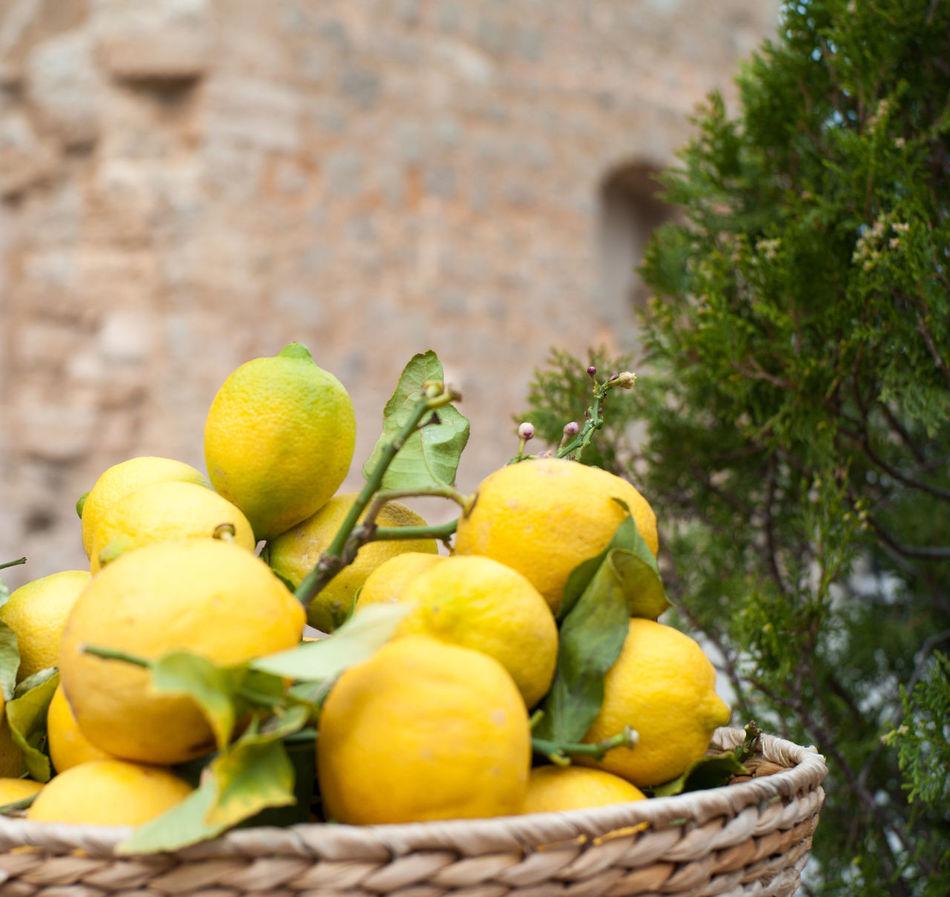 Fine ripe lemons in bowl Citrus Fruit Close-up Food Freshness Fruit Healthy Eating Lemon Lemon Flavor Mediterranean  Mediterranean Food Yellow