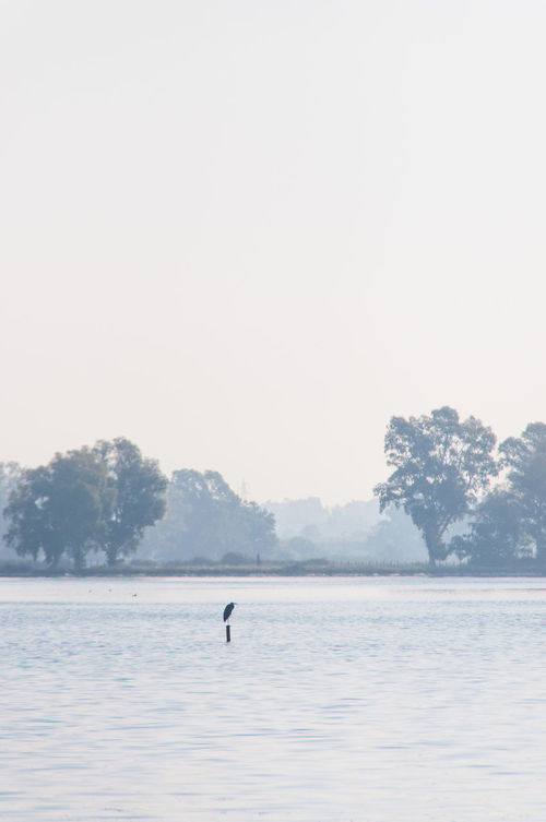 Beauty In Nature Bird Calm Crane Day Equilibrium Escapism Fog Gradient Haze Idyllic Lake Majestic Monochrome Nature Peace Remote Scenics Shapes Solitude Tranquil Scene Tranquility Tree Water Waterfront