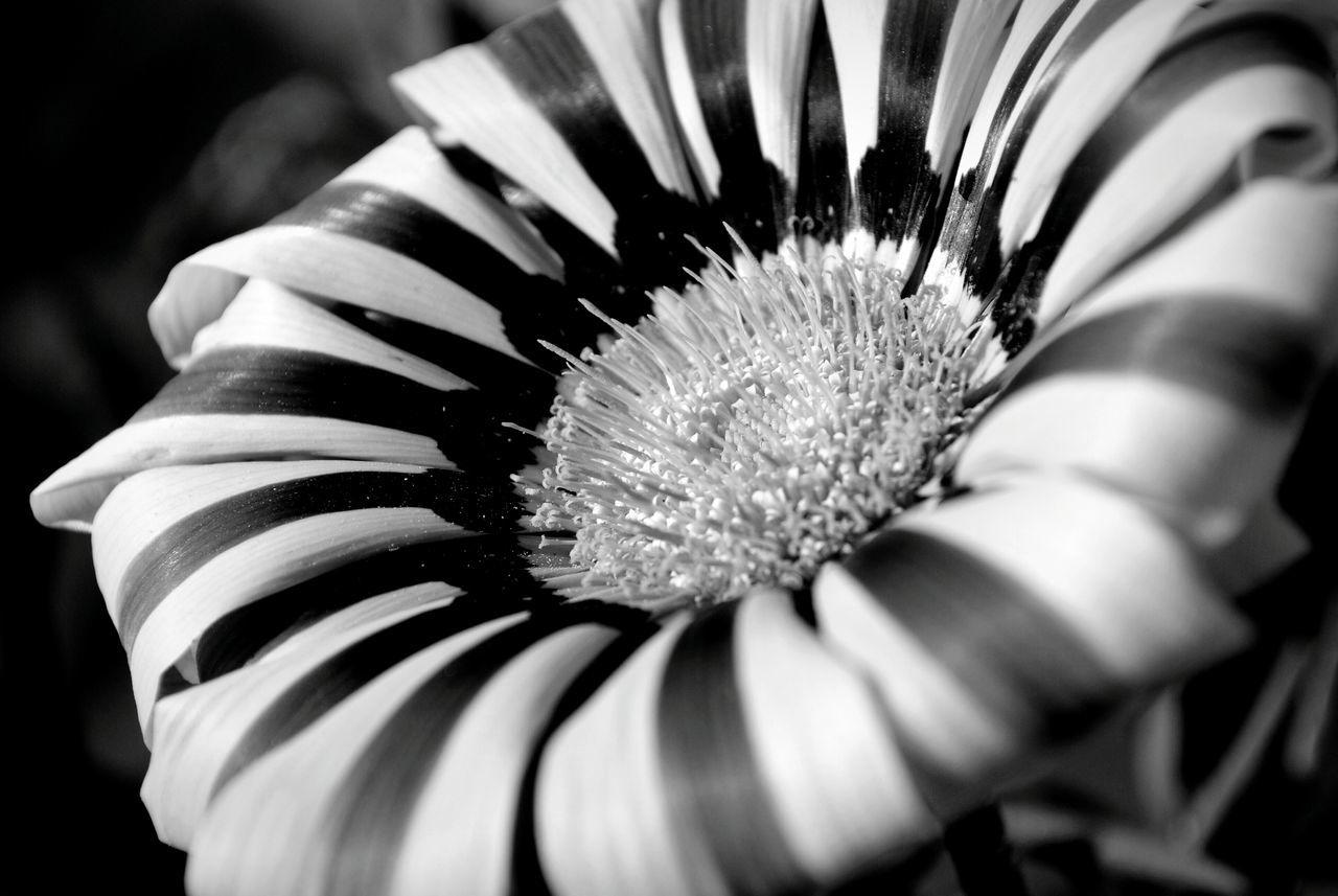 Nature <3  Close-up Black & White Eyem Nature Lover Hanging Out Taking Photos Urban Spring Fever Flower - at Gurgaon India