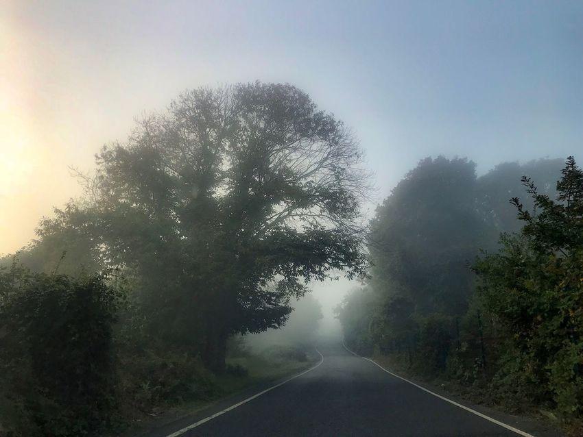 Nature Fog Foggy