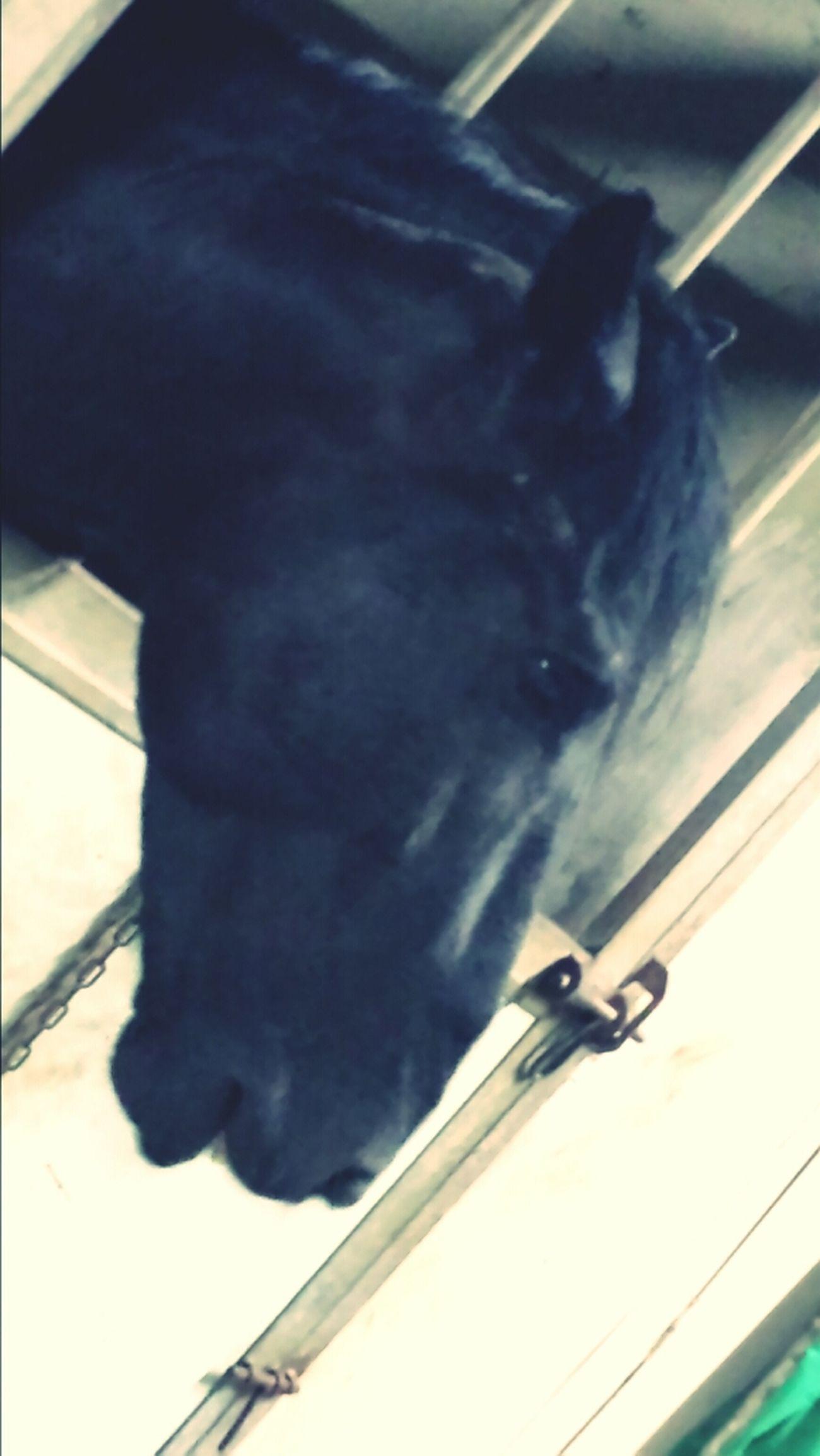She seems a lil sad. Animal Horse Agriturismo Agritourism