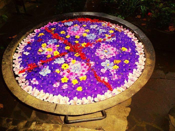 Flores De Eloisa Flowers Flores EyeEm Nature Lover