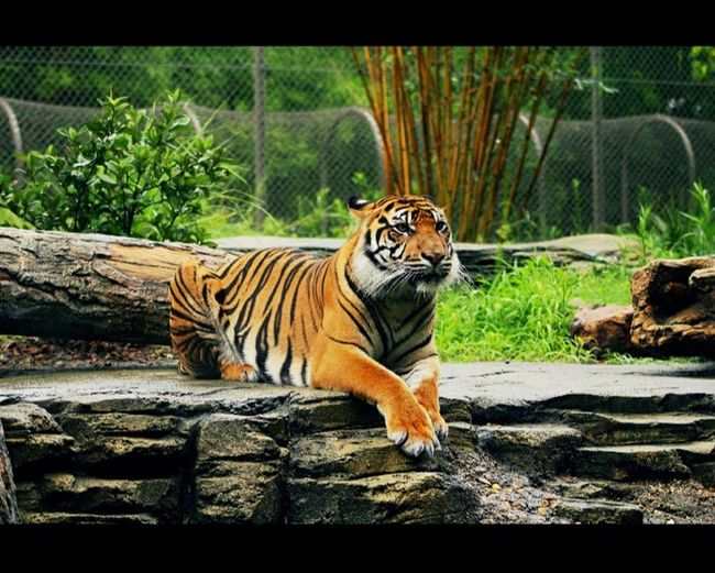 Hanging Out Cheese! Enjoying Life Taking Photos Relaxing Check This Out JacksonvilleFL Jacksonville Tiger