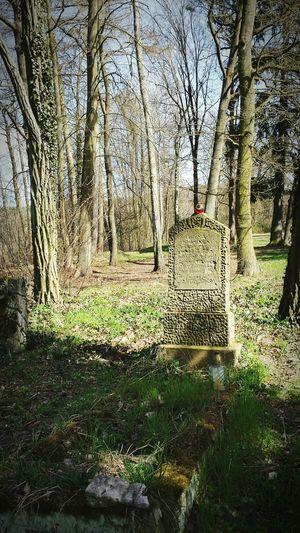 Abondoned Cmentary Smartphonephotography Spring Historical Monuments Photo Niesulice Cmentarz Opuszczone Eyemphotos