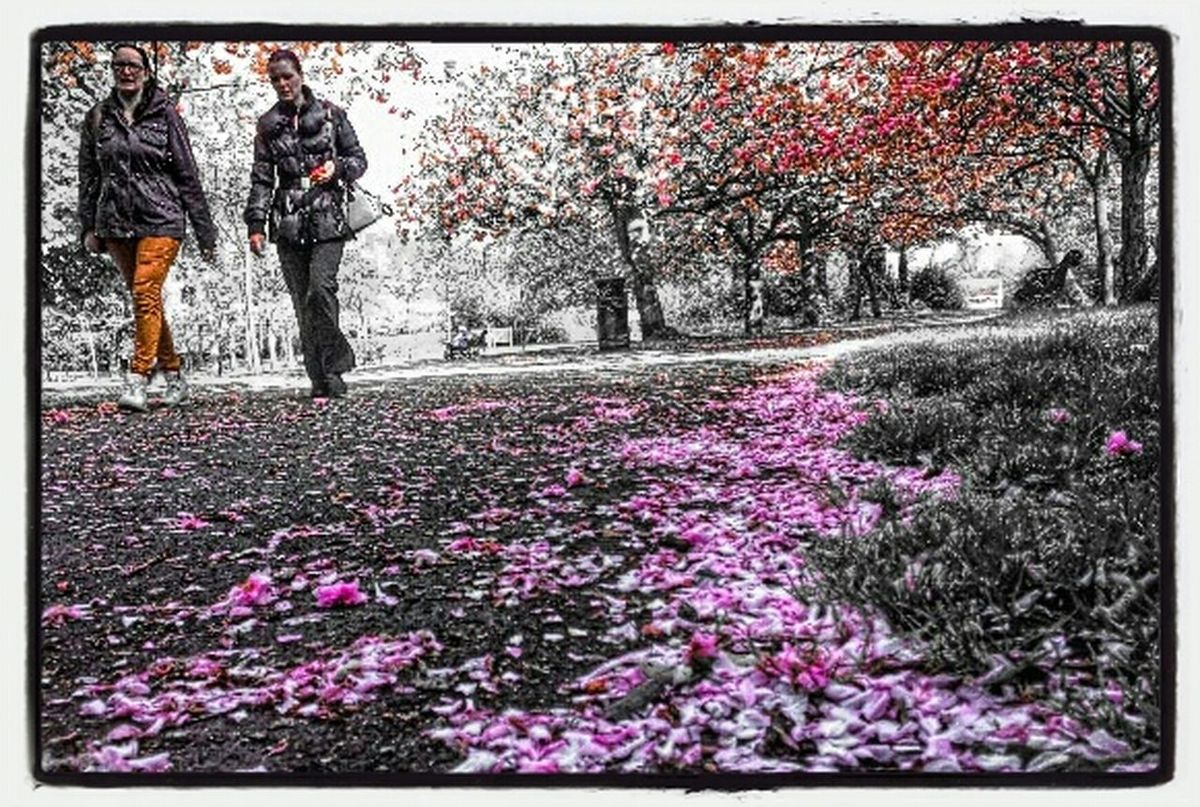 Walking Around Spring Flowers Relaxing Dublin, Ireland