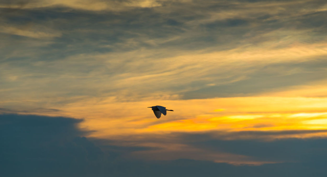 Silhouette bird with dramatic sky background Animal Animal Themes Atmosphere Bird Climate Cloud - Sky Clouds Dramatic Sky Evening Evening Light Evening Sky Flying Low Angle View Mid-air Nature Nature No People Orange Color Scenics Silhouette Sky Sky And Clouds Sky Scape Sunset Weather