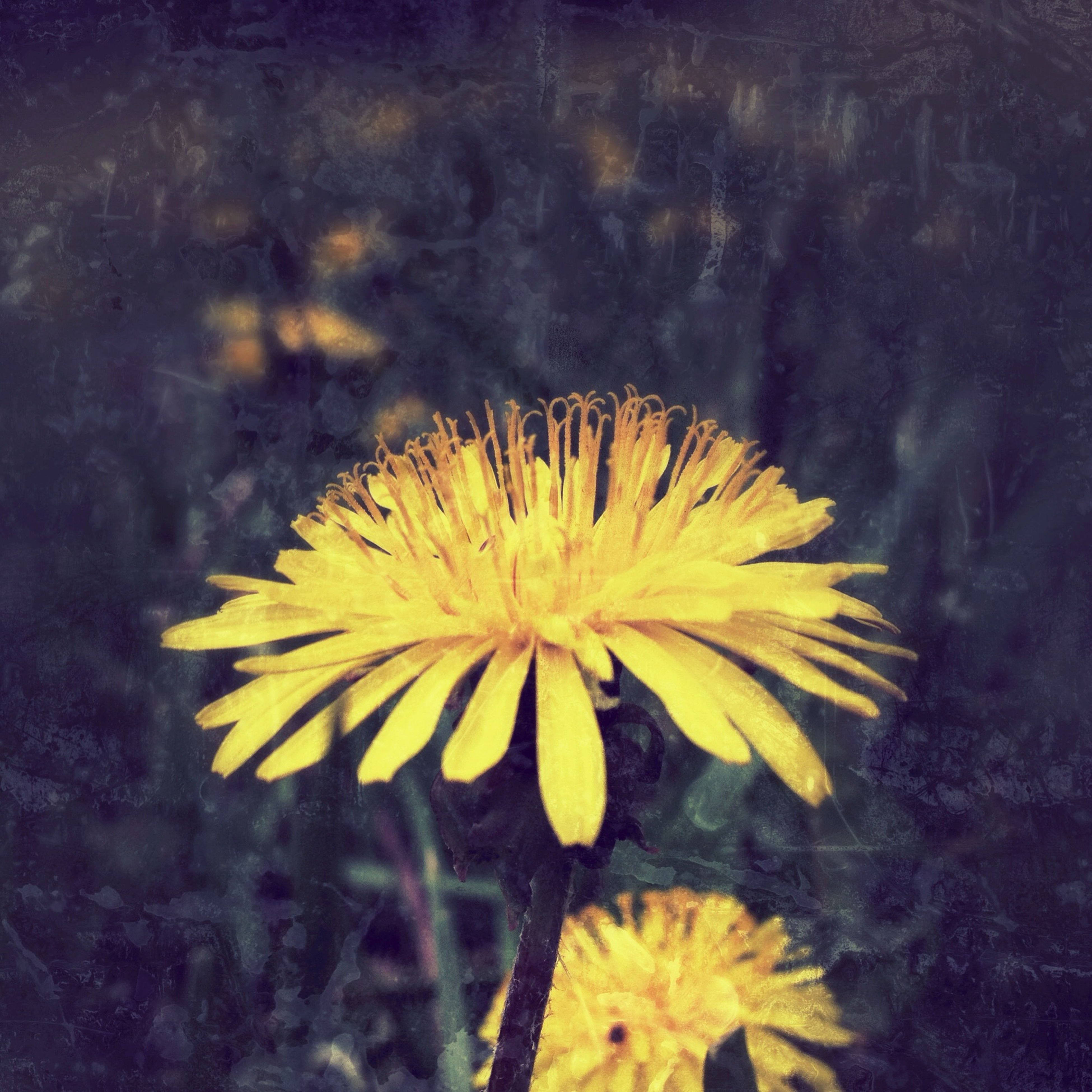 flower, yellow, fragility, petal, freshness, flower head, growth, beauty in nature, nature, close-up, plant, blooming, high angle view, single flower, water, no people, in bloom, outdoors, day, pollen