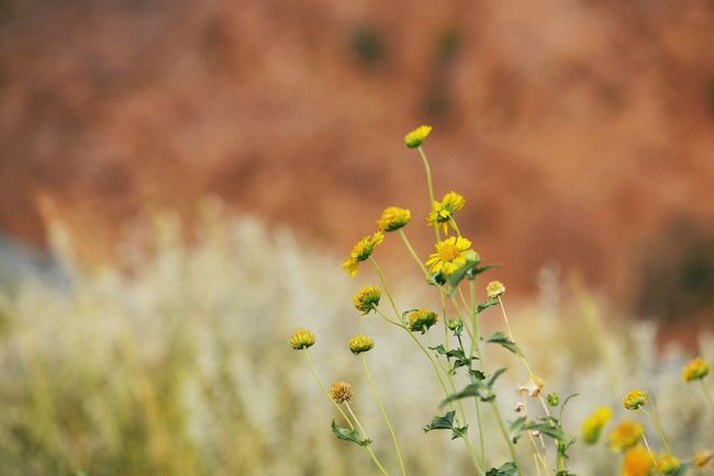 Wild daisies in Shafa Supernormal Flowers EyeEm Nature Lover Nature_collection
