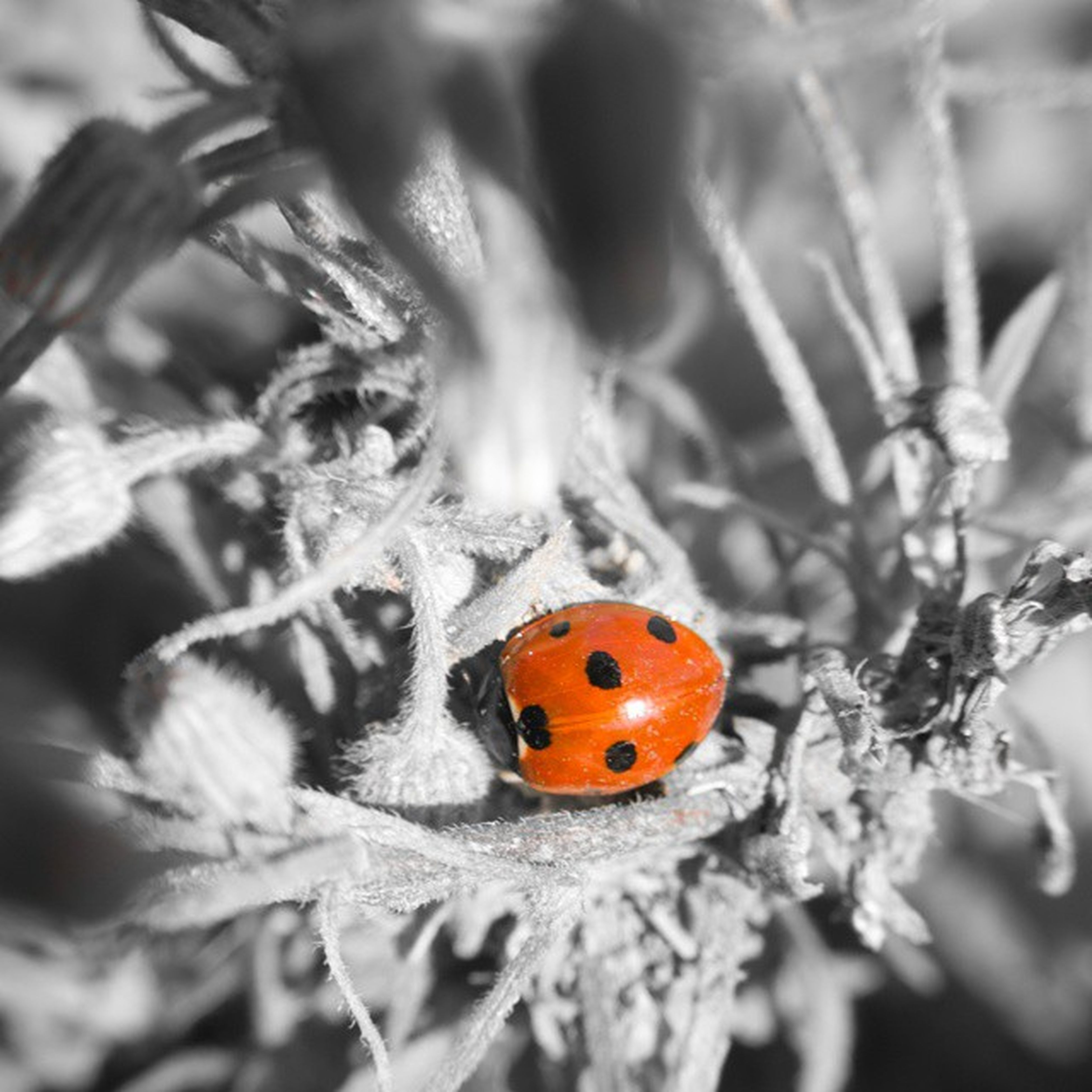 insect, animal themes, animals in the wild, ladybug, one animal, wildlife, close-up, focus on foreground, animal markings, orange color, nature, butterfly - insect, selective focus, beauty in nature, spotted, leaf, plant, butterfly, outdoors, no people