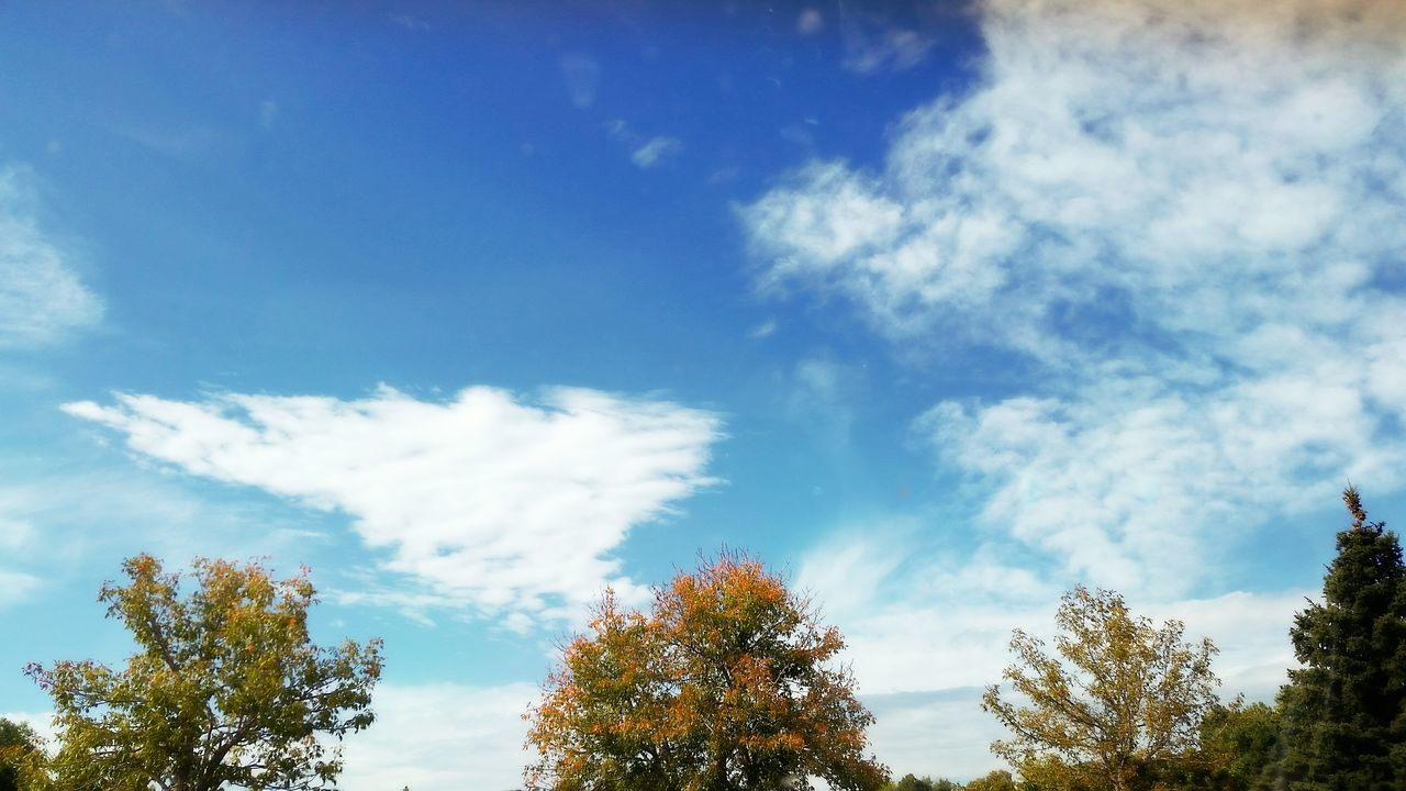 sky, nature, tree, beauty in nature, low angle view, day, tranquility, scenics, outdoors, cloud - sky, blue, no people, tranquil scene, growth