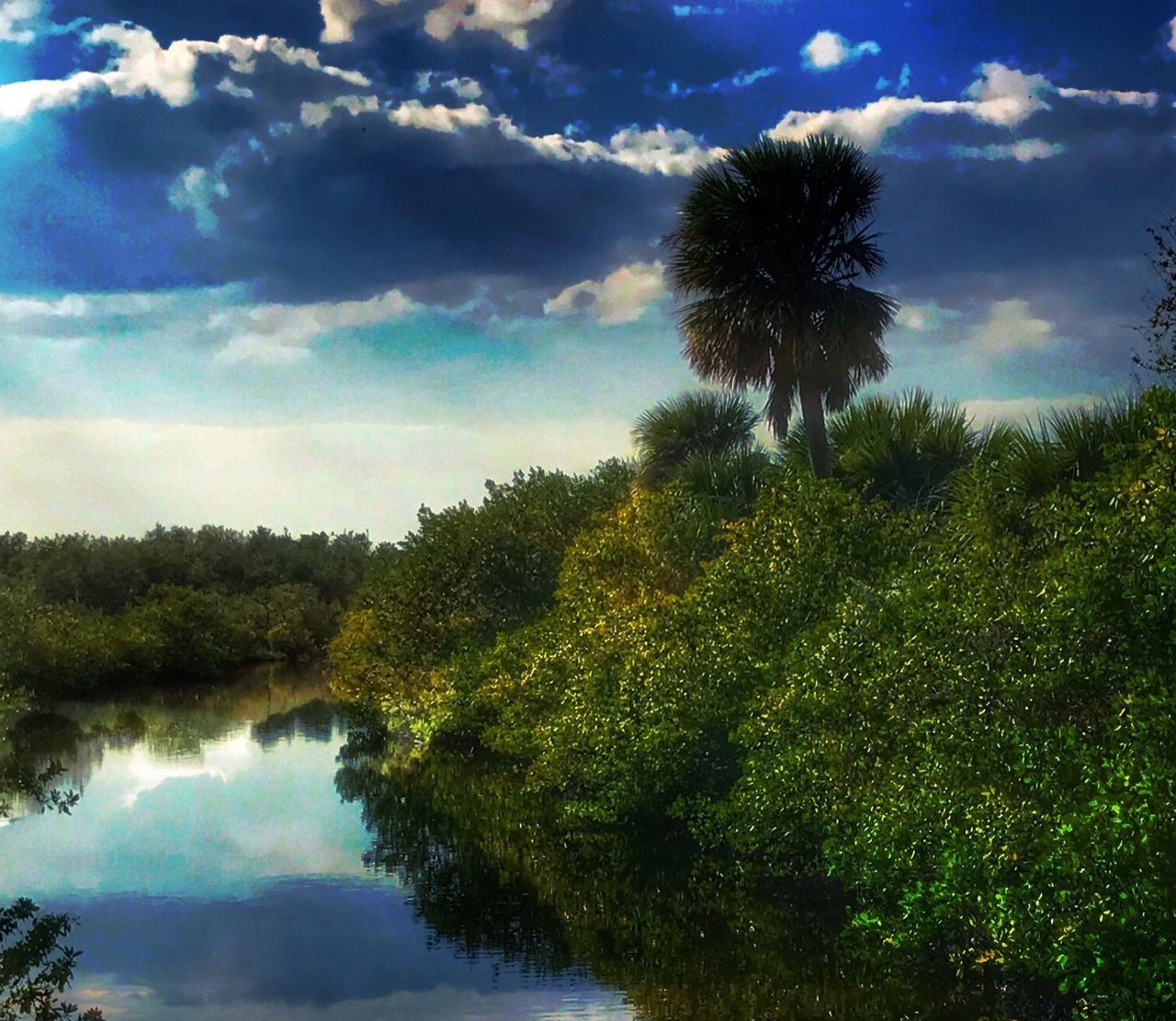 Mangroves Water Reflections Tree Sky Nature Growth Tranquil Scene Reflection Tranquility Beauty In Nature Cloud - Sky Palm Tree Outdoors No People Day