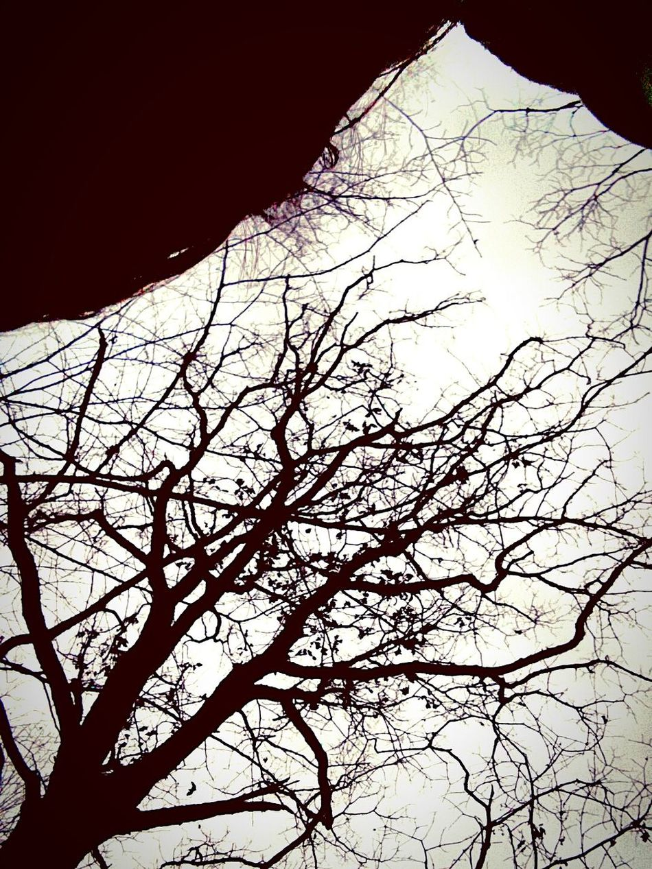 Didn't even mean to take this pic but i really liked it! Accidentalart Deadtrees Lookingup Sky And Trees Taking Photos Check This Out That's Me Nature EyeEm Best Shots Interesting Trees Mobilephotography Westvirginia Exploringpaidoff
