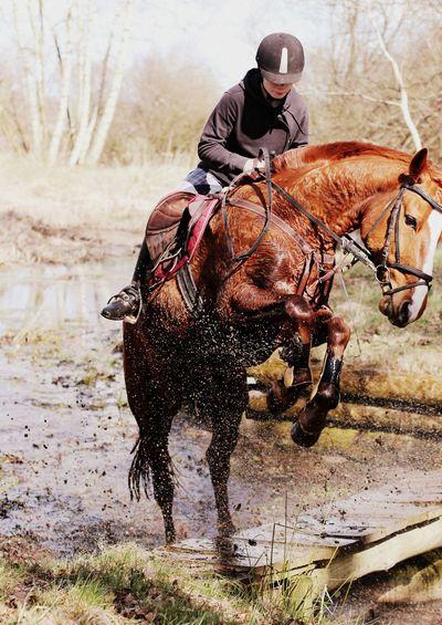 Eeyem Photography Horse Lifestyle Action Riding Adrenalin Jump Flying ❤️ Mychampion