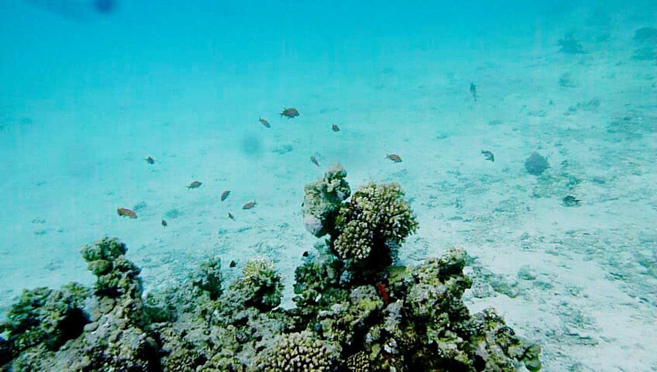 Diving Underwater UnderSea Sea Life Nature Coral Beauty In Nature Water Underwater Photography Coral Reefs