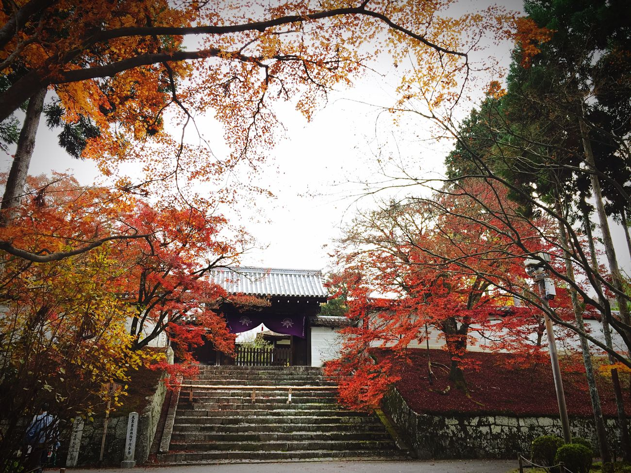 今年の曼殊院門跡🍁 Tree Architecture Built Structure Autumn Building Exterior Low Angle View Change Steps Place Of Worship Day Staircase Travel Destinations Outdoors No People Cultures Steps And Staircases Sky Nature 曼殊院門跡 Kyoto Red