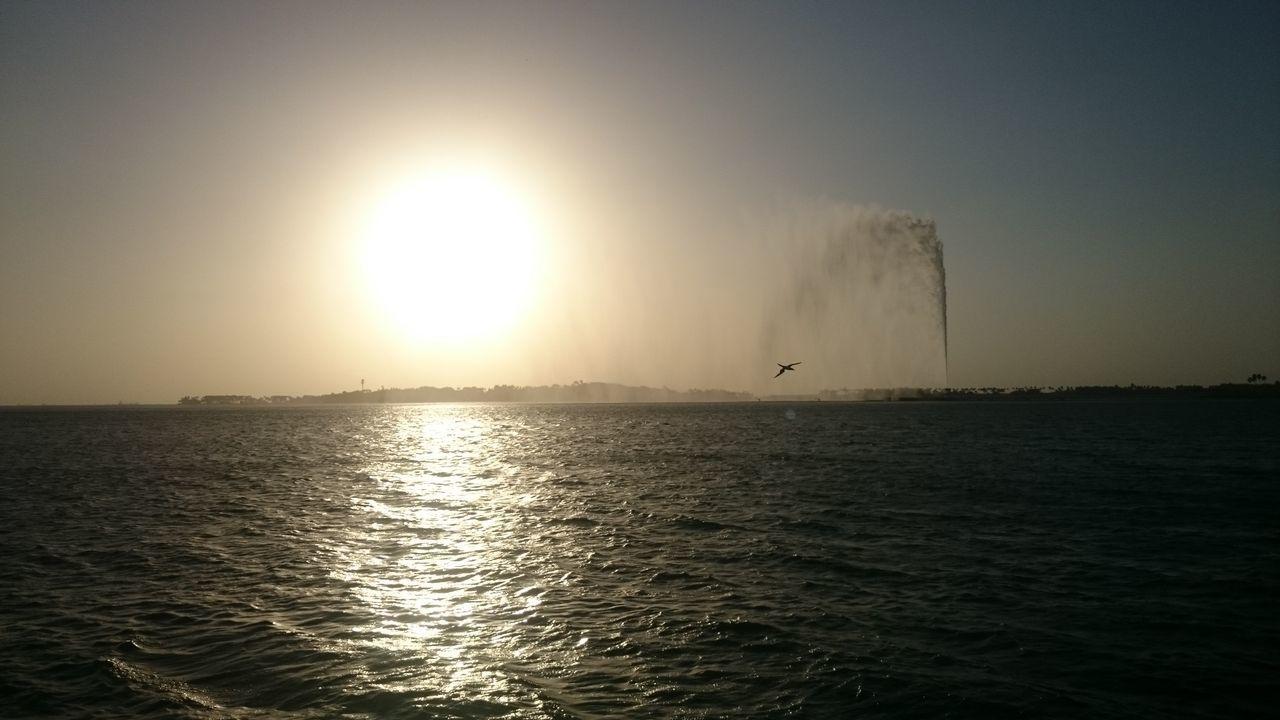Quietude. Clear your mind. Sunset Silhouettes RedSea Kingfahadfountain Flyingbird Free Freeasabird Showcase March Saudiarabia First Eyeem Photo