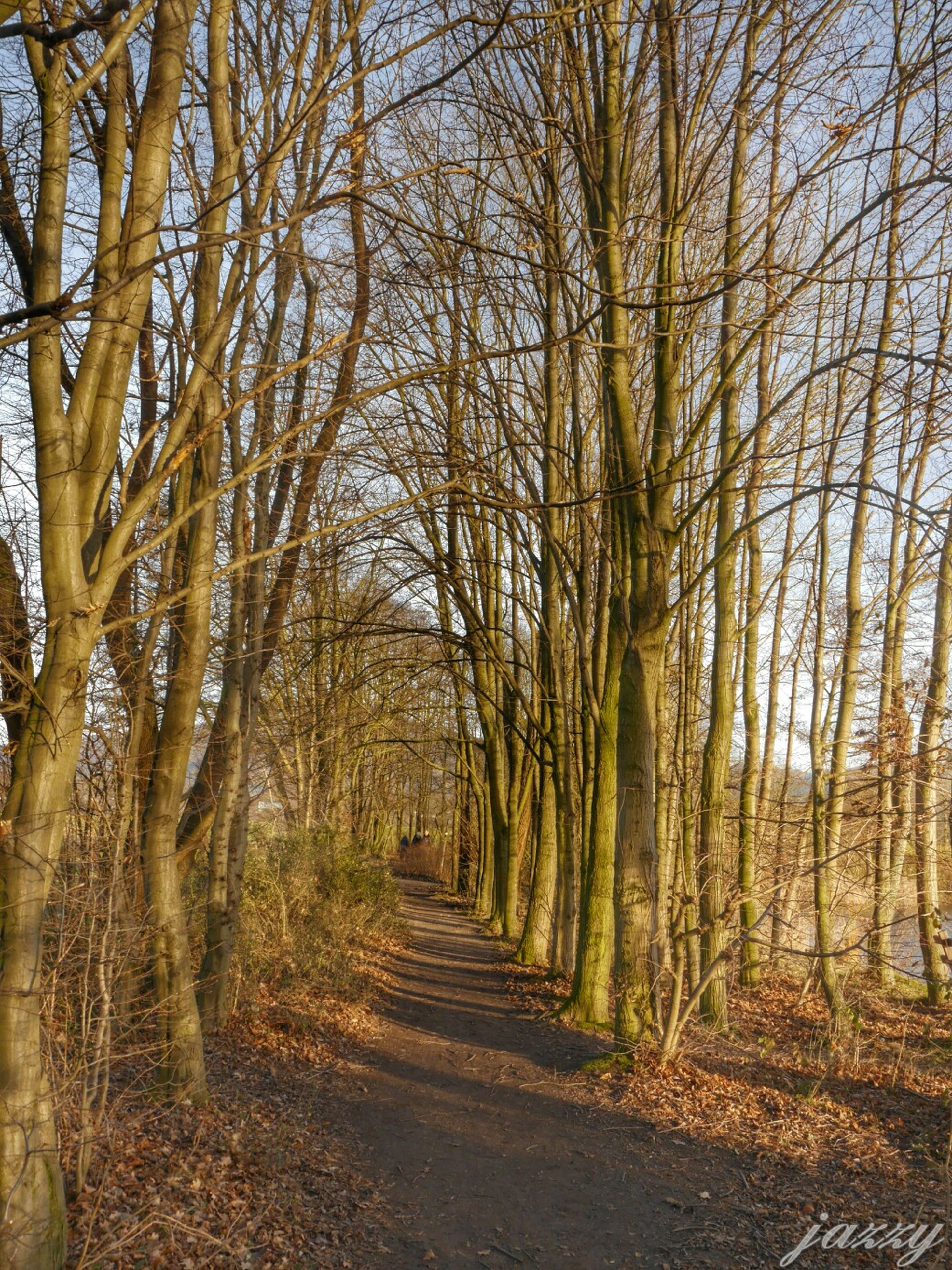 tree, the way forward, tranquility, diminishing perspective, tree trunk, tranquil scene, forest, nature, vanishing point, growth, woodland, treelined, beauty in nature, bare tree, branch, scenics, dirt road, landscape, footpath, non-urban scene
