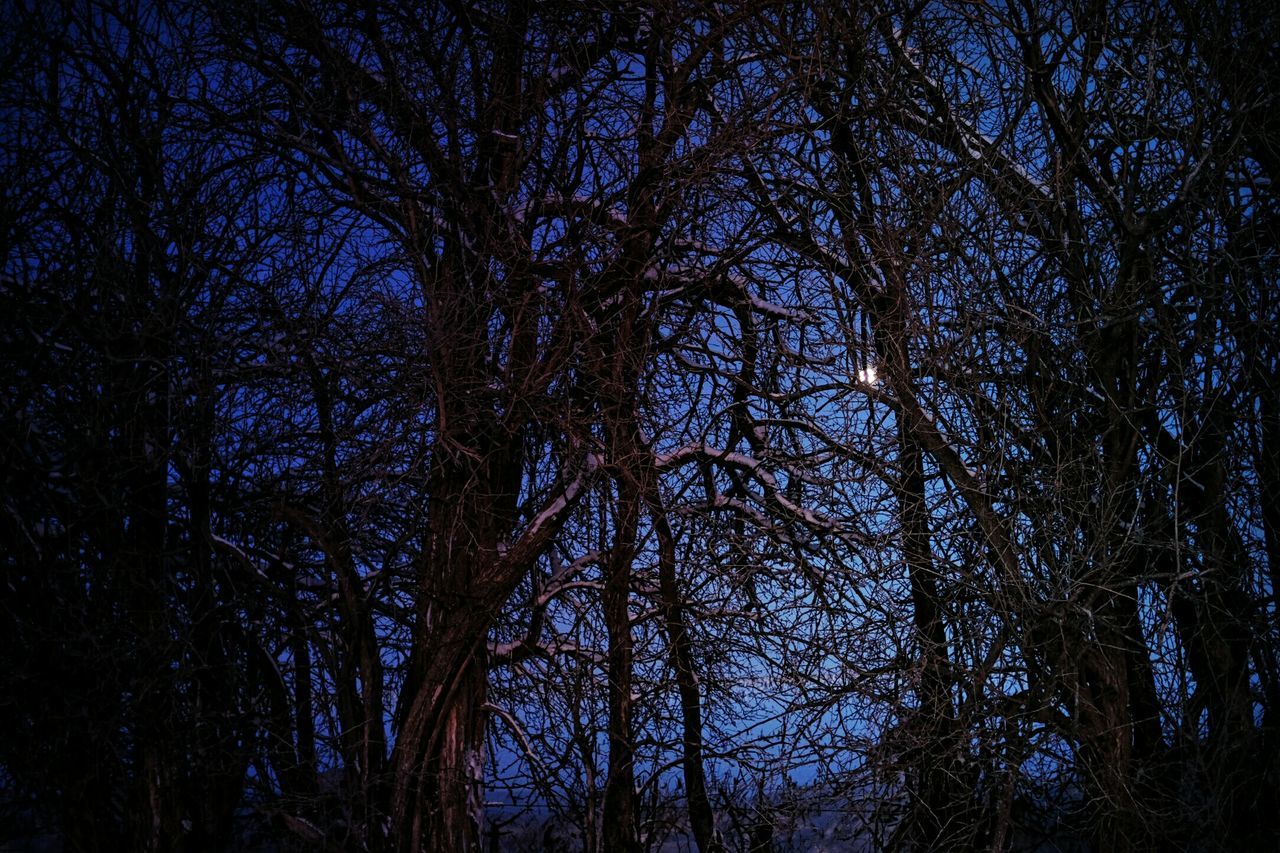 Sing your song to the moonlight. Coyote EyeEm Best Shots Night Photography Full Moon My Tapestry Coldscape Crisp Air Branch Office Enjoying Life My Time