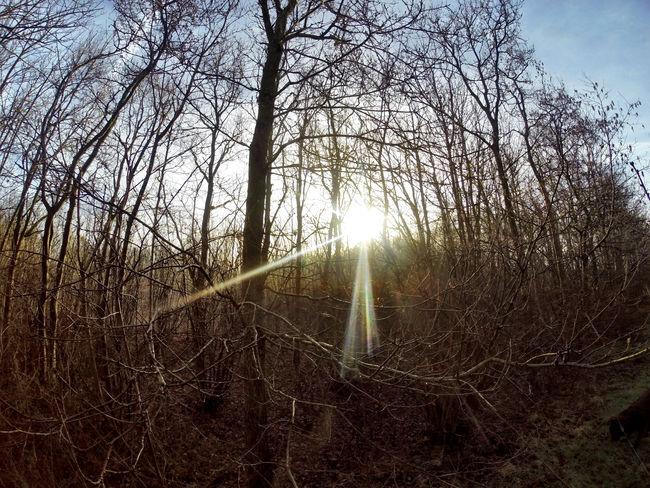 Nature Sunset Sunrise Trees Tree Landscape Sun Sunshine Gopro Taking Photos