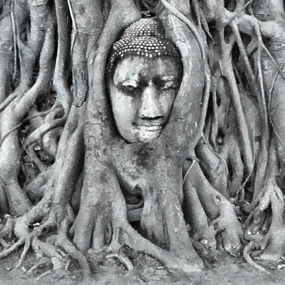 Image of Buddha head in the tree's roots. Thailand Unseen Unseenthailand Strange Weird Amazing Instagood Instacool Wonderful Heritage Worldcaptures Worldheritage World_shotz Southeastasia