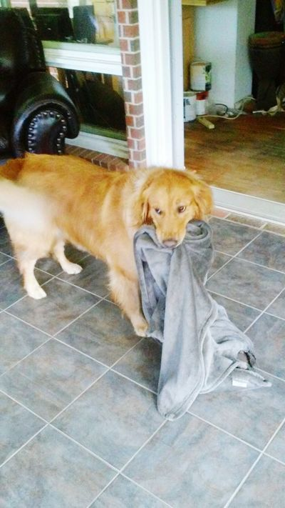 Summer Dogs Loves His Blanket