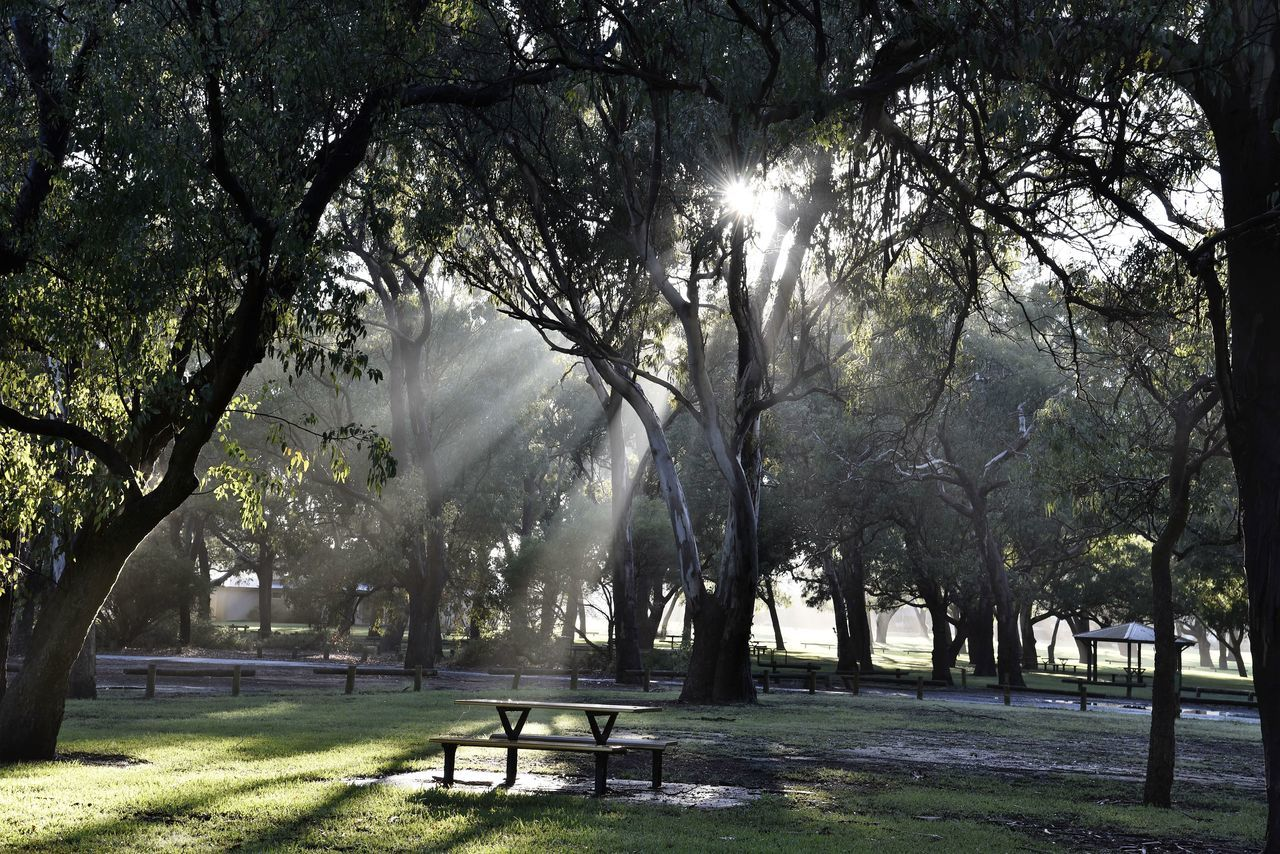 Sunlight Falling Through Trees On Field At Park