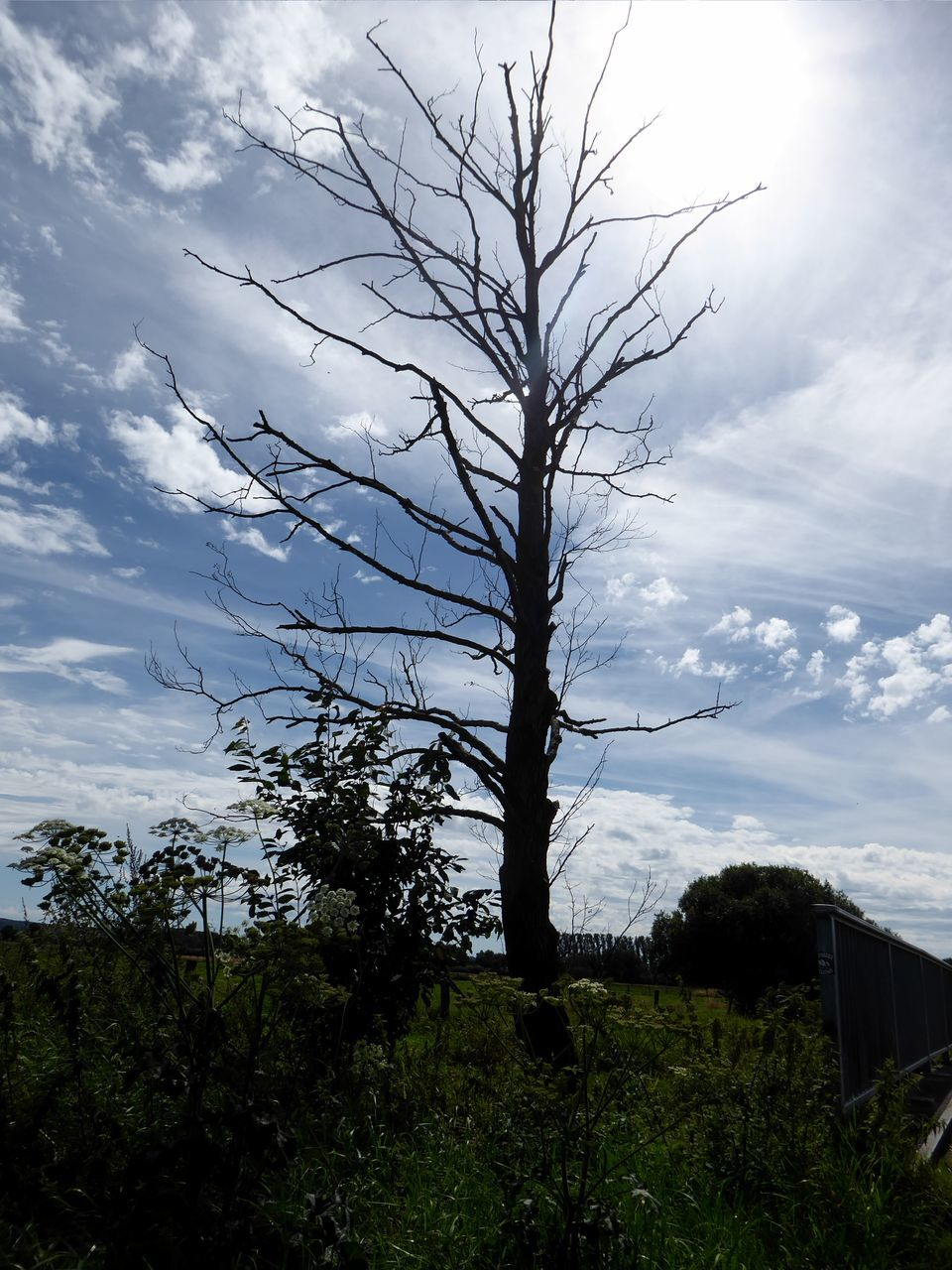 tree, sky, nature, no people, outdoors, day, beauty in nature, cloud - sky, landscape, tranquility, scenics, growth