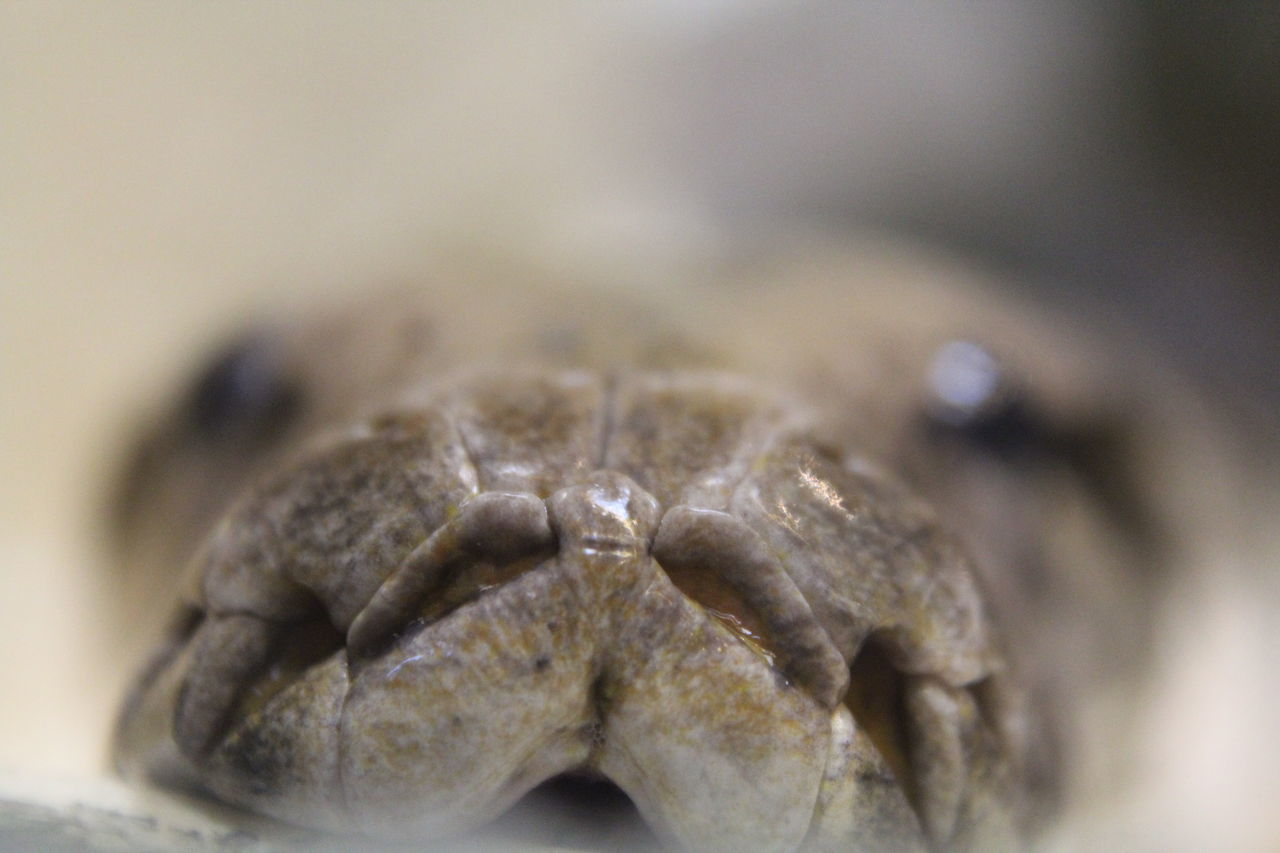 Animal Themes Animals In The Wild Close-up EyeEm Animal Lover Eyem Macro Macro Macro Animal Macro Beauty Macro Photography Makro Makro Photography No People One Animal Reptile Reptile Reptile Photography Reptiles Schlange  Schlangen Snake Snakes