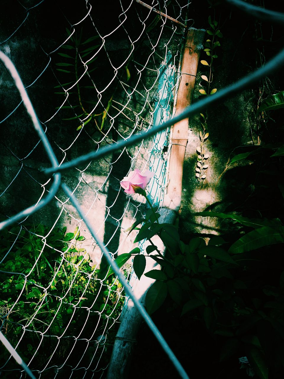chainlink fence, metal, outdoors, protection, day, green color, one person, plant, real people, leaf, trapped, nature, animal themes, tree, close-up, people