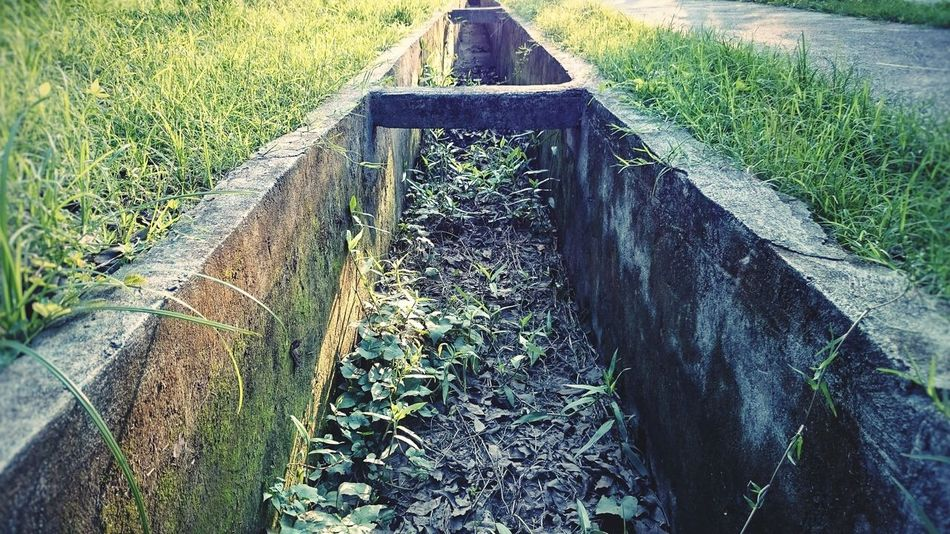 Green in ungreen places... Canal Weeds Concrete Perspective Dead Weeds Living Plants PhonePhotography Ordinary Extraordinary